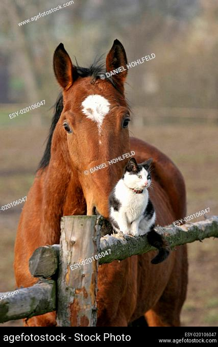 Dicke Freunde