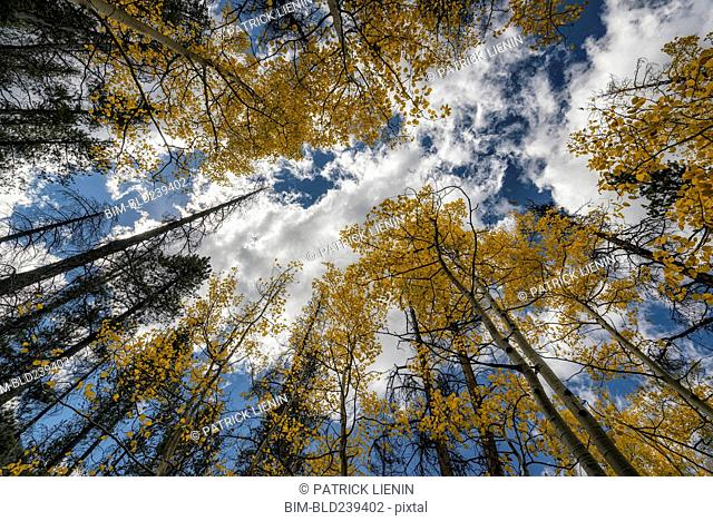 Trees in autumn under cloudy sky