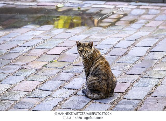 Cat in the streets of Riga, Latvia, Europe