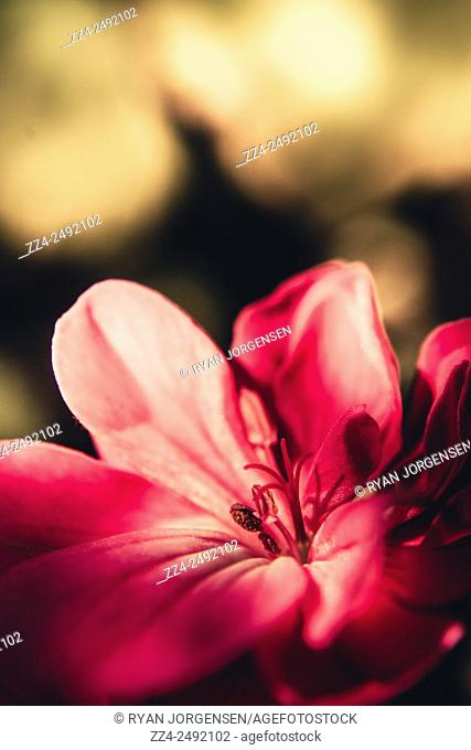 Instagram filtered photograph on a beautiful pink flower in shades of dark and light. Retro nature artwork