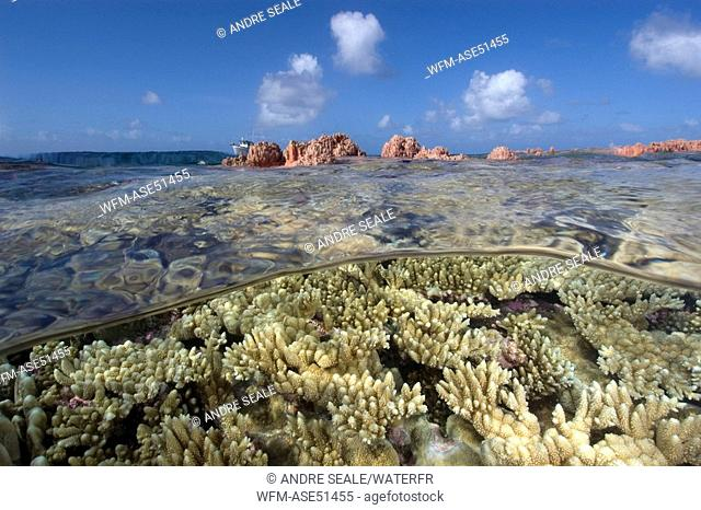 Coral Reef, Rongelap Island, Micronesia, Pacific, Marshall Islands