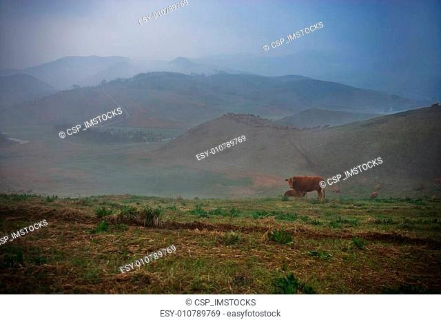 Beautiful ranch in South Korea,Seosan Ranch