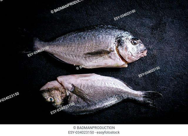 Couple of glithead fish on black background
