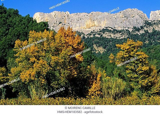 France, Vaucluse, landscape towards Dentelles de Montmirail