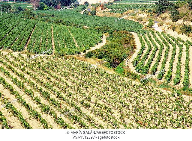 Vineyards. Rioja Alavesa, Álava, Basque Country, Spain