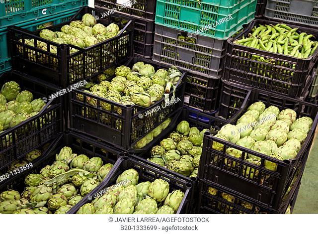 Artichokes, Mercabilbao fruits and vegetables wholesale market, Basauri, Bilbao, Bizkaia, Euskadi, Spain