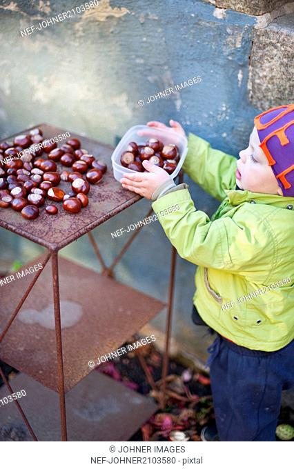 Boy holding plastic box with chestnuts
