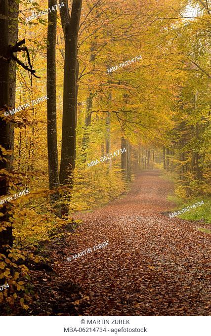 Autumnal deciduous forest, Germany, Bavaria, Allgäu, Ostallgäu, Irsee