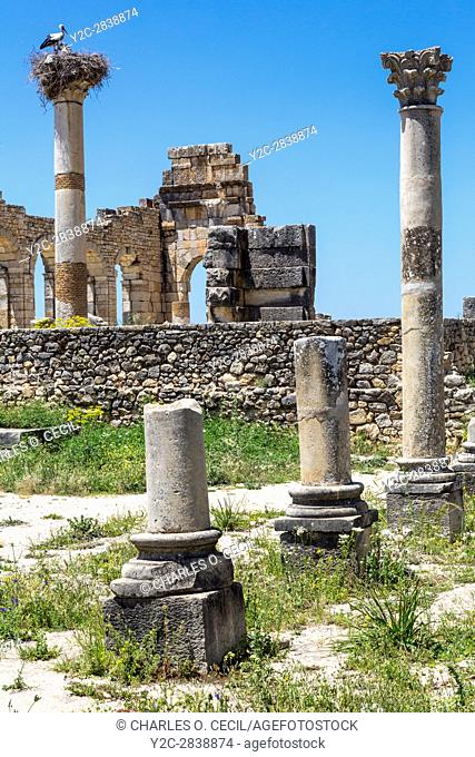 Volubilis, Morocco. Columns of the Capitol in Foreground, Basilica in Background