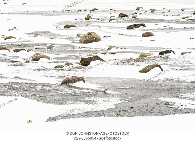 Hudson Bay coastline at freeze-up, Wapusk NP, Cape Churchill, Manitoba, Canada