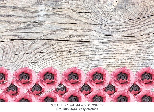 Pink poppies on wood surface with patina, organic texture background copy space