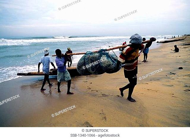 Fishermen carrying their catch, Marina Beach, Bay Of Bengal, Chennai, Tamil Nadu, India