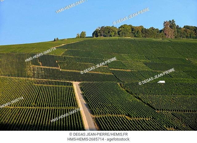France, Marne, Hautvillers, Marne Valley, vineyard in champagne listed Premier Cru and listed as World Heritage by UNESCO