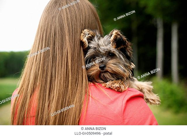 Yorkshire terrier puppy on woman's arms Debica, Poland