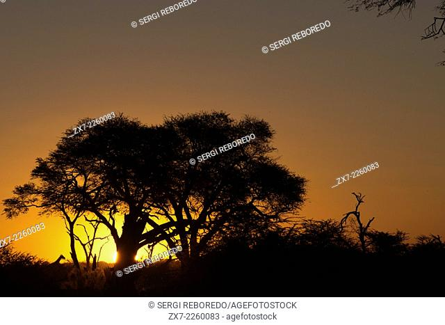 Sunset near the camp Savute Elephant Camp by Orient Express in Botswna in Chobe National Park . HISTORICAL BRIEF DESCRIPTION OF BOTSWANA : It is believed that...