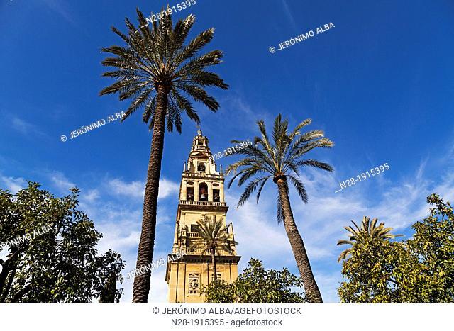 Alminar Mezquita cathedral Cordoba Andalusia Spain