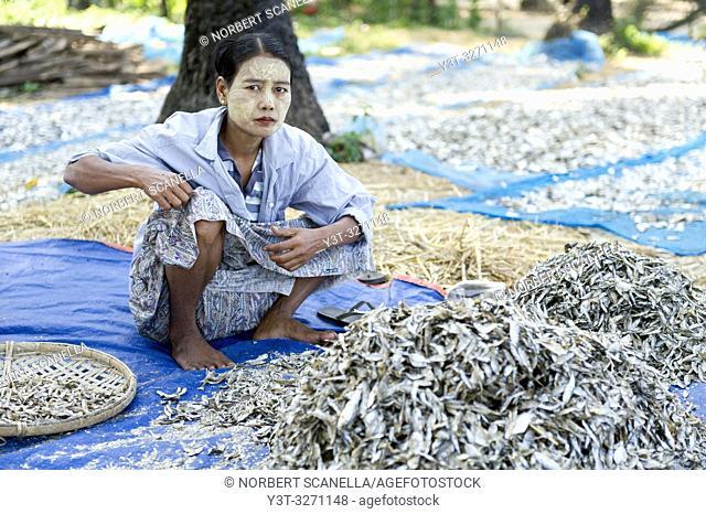 Myanmar (ex Birmanie). Ngapali. Arakan state. Bengal Golf Course. Fisherman village. Woman working at drying fish