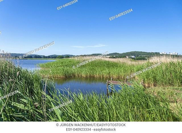 Landscape at the Selliner lake, Baabe, Ruegen, Mecklenburg-Vorpommern, Deutschland, Europe