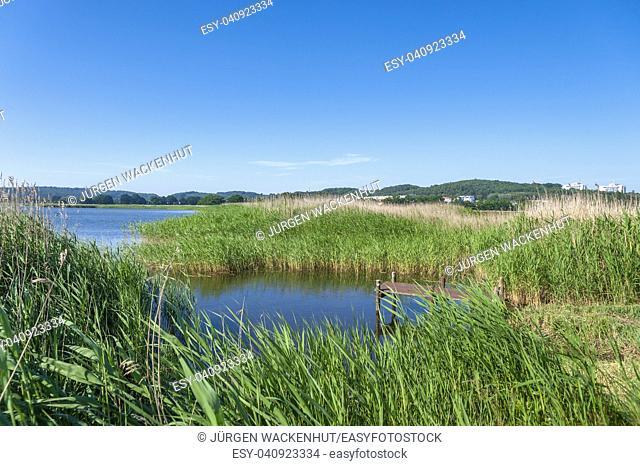 Landscape at the Selliner lake, Baabe, Ruegen, Mecklenburg-Vorpommern, Deutschland, Europe