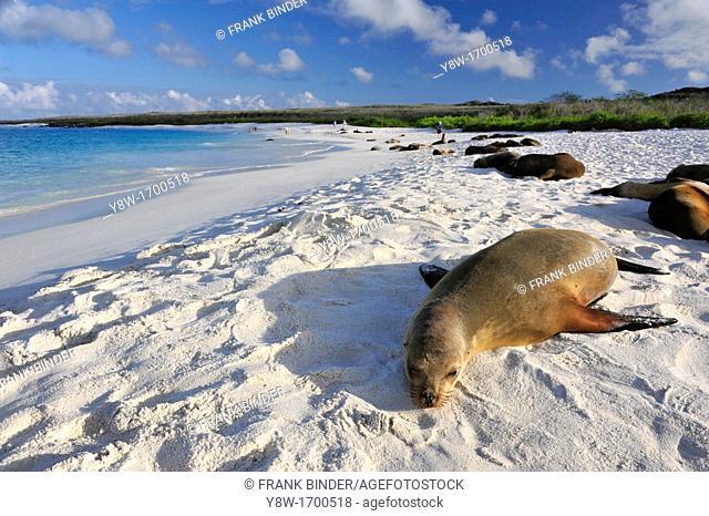 Sea Lions on Galapagos Islands
