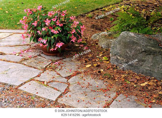 Patio stones and begonia flowers Sudbury Ontario