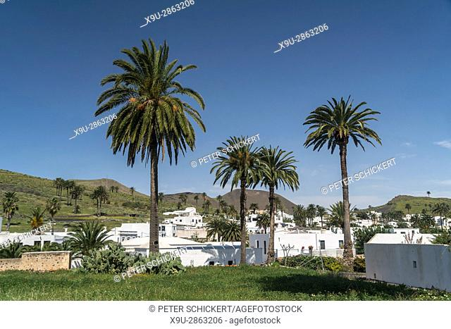 Haria in the Valley of 1000 Palms, Lanzarote, Canary Islands, Spain