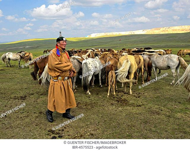 Mongolian man, horse-honored, in traditional dress with herds of horses, Mongolia