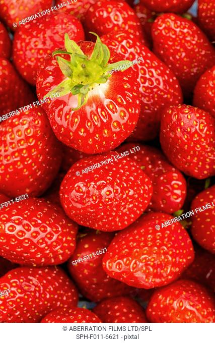 Fresh strawberries, close up
