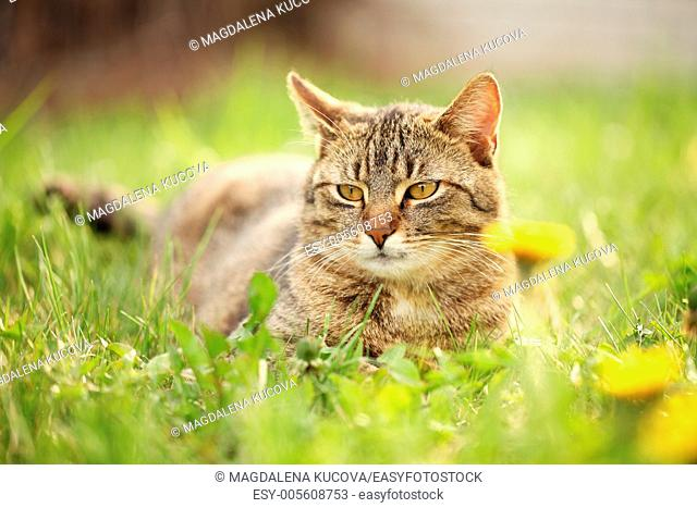 Cat resting in spring grass