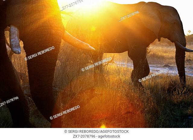 A magical sunset with elephants 4x4 inches from where we vahiculo the game safari camp near Khwai River Lodge by Orient Express in Botswana