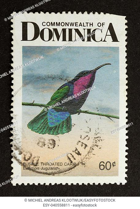 DOMINICA - CIRCA 1980: Stamp printed in Dominica shows a purple throated carib, circa 1980