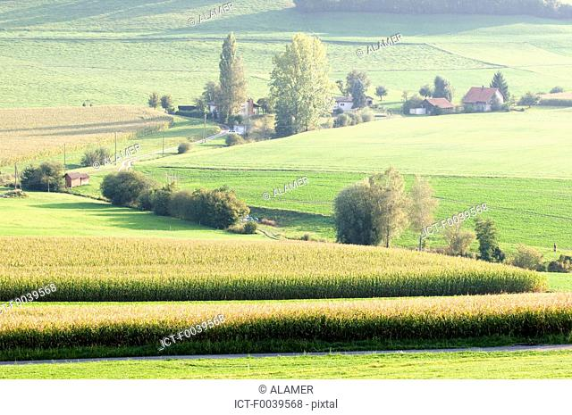 Switzerland, canton of Fribourg, landscape between Fribourg and Murten