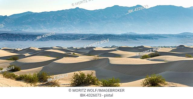 Creosote Bushes (Larrea tridentata) in the Mesquite Flat Sand Dunes, sand dunes, foothills of the Amargosa Range Mountain Range behind, Death Valley