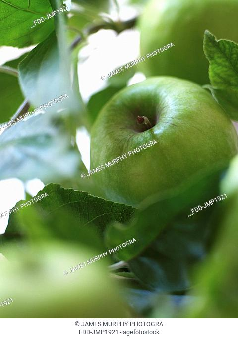 Granny Smith Apples with Leaves