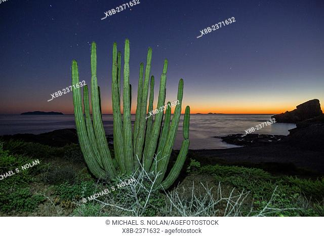 Sunset along the shoreline with organ pipe cactus, Stenocereus thurberi, at Himalaya Beach, Sonora, Mexico