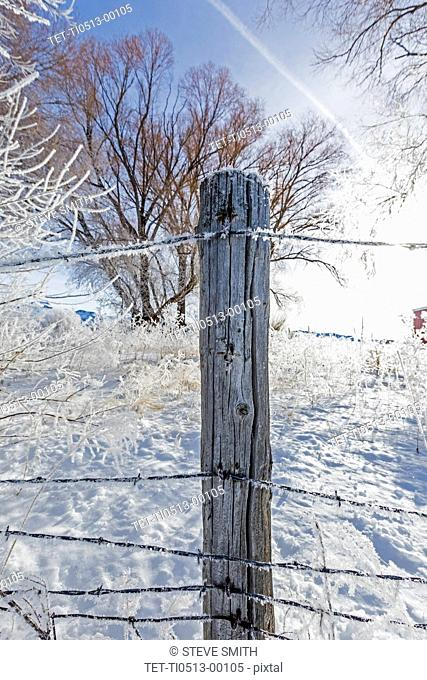 Fence post during winter