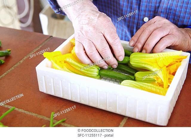 Courgette flowers being packed into a polystyrene container