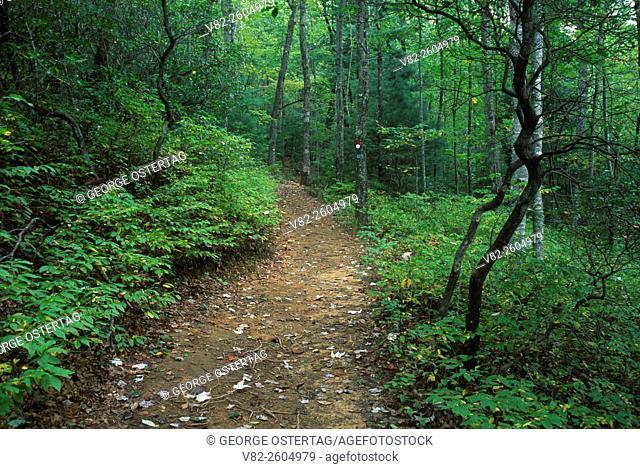 Trail, Gorges State Park, North Carolina