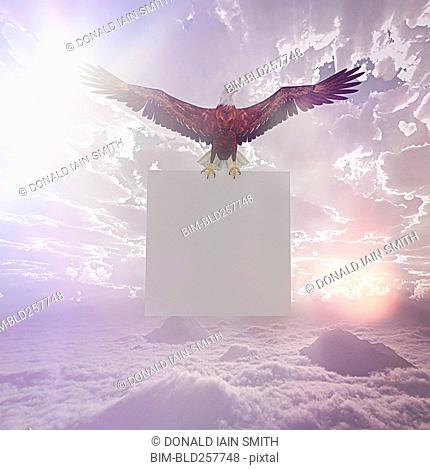 Eagle flying in sky holding blank sign