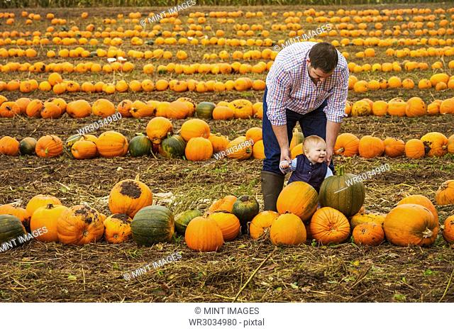 A man and a boy toddler among rows of bright yellow, green and orange pumpkins in autumn
