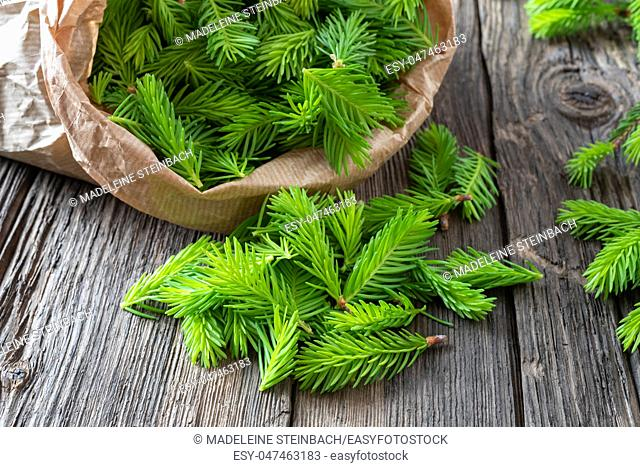 Young spruce tips collected in a paper bag to prepare homemade herbal syrup