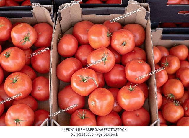 Red beef tomatoes (Solanum lycopersicum) fill boxes ready to sell at the Bronisze Wholesale Market - one of the biggest fruits and vegetables markets in Poland