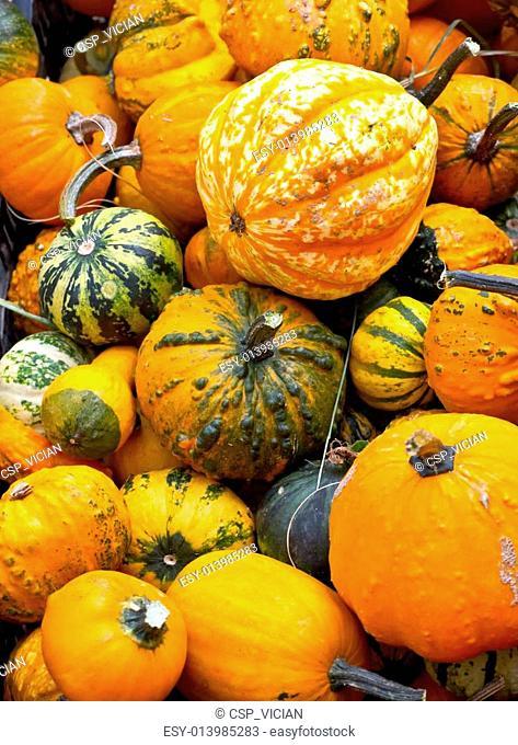 Colorful pumpkins assortment