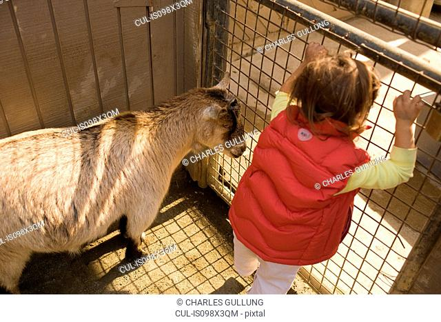 Young girl with goat at petting zoo