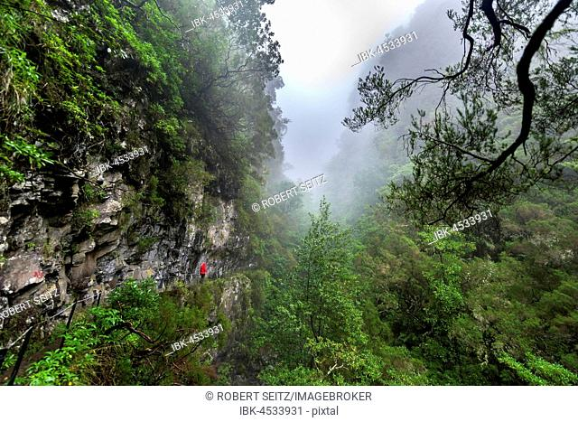 Hikers on narrow footpath along a Levada watercourse, rainforest in fog, Caldeirao Verde, Queimadas, Madeira, Portugal