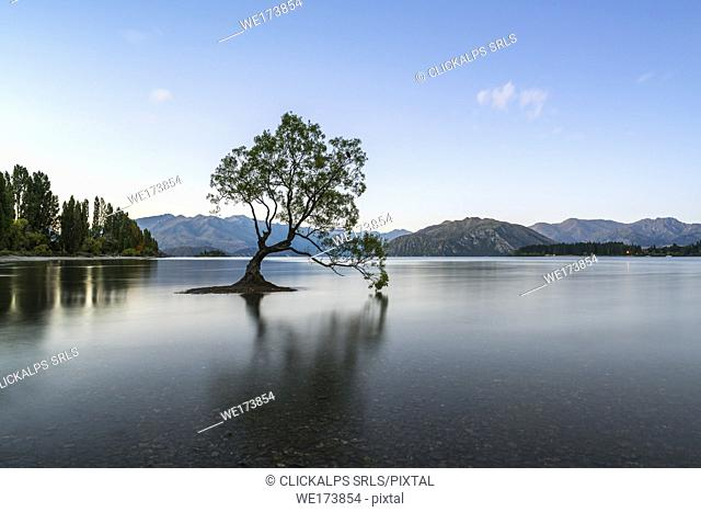 The lone tree in Lake Wanaka at dusk. Wanaka, Queenstown Lakes district, Otago region, South Island, New Zealand