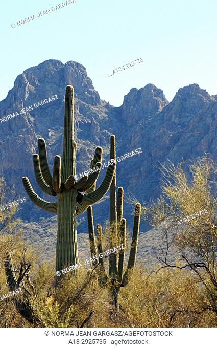 Ironwood Forest National Monument, Sonoran Desert, Marana, Arizona, USA