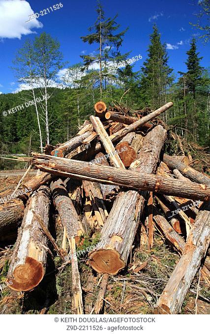 Cedar logs in debris pile from clearcut logging on south side of Skeena river between Terrace and Hazelton, BC