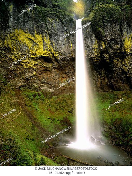 Elowah Falls, plunge type falls. John B. Yeon State Park. Multnomah County. Oregon. USA