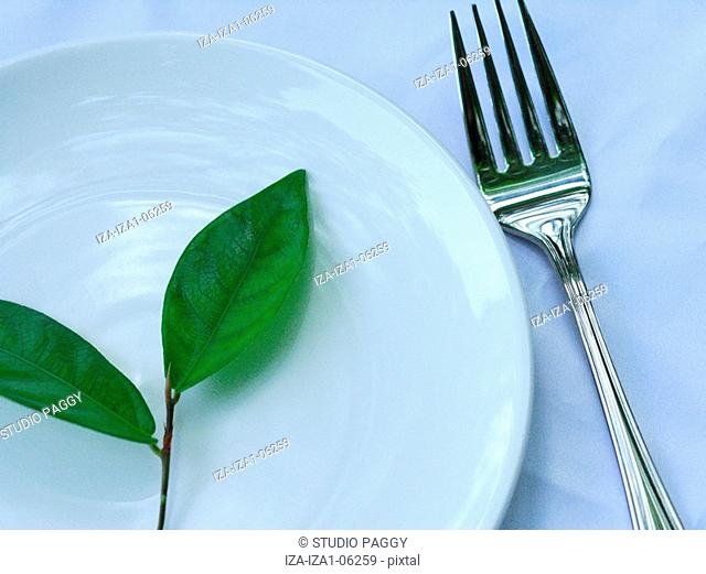 Close-up of Narra leaves in a plate Pterocarpus Indicus